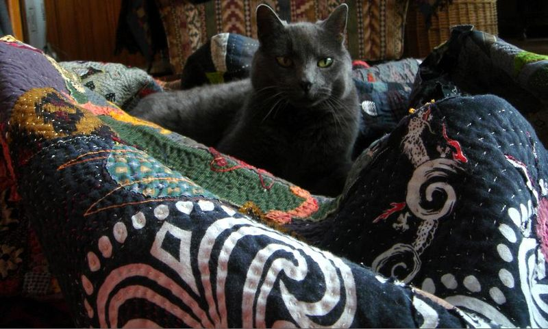 The quilt as a nest again