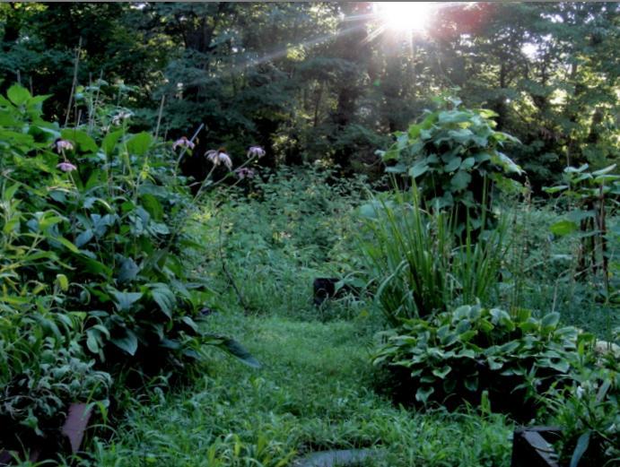 Garden in high summer