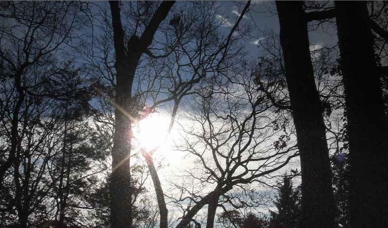 Bare branches again