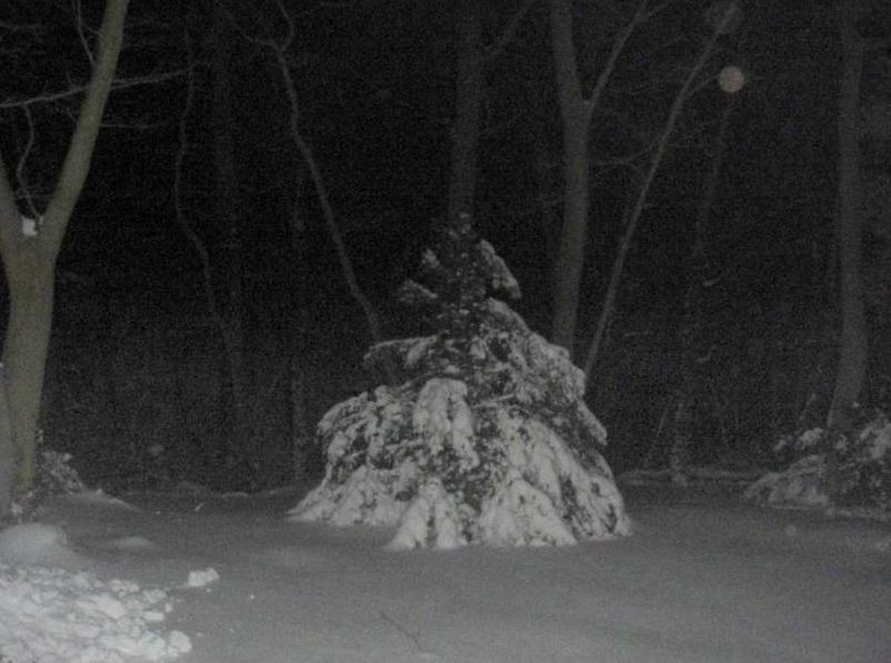 A winter princess