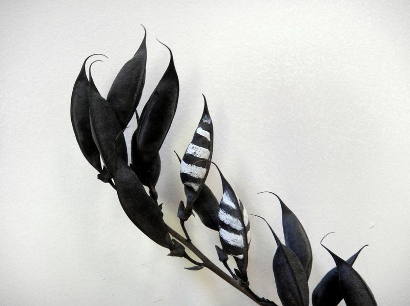Magic feather pods