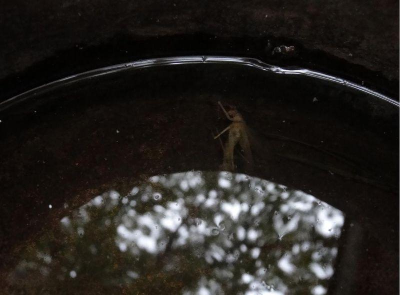 Death in the rain bucket