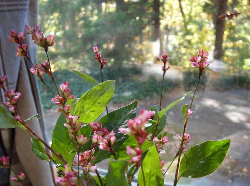 November indigo blooms