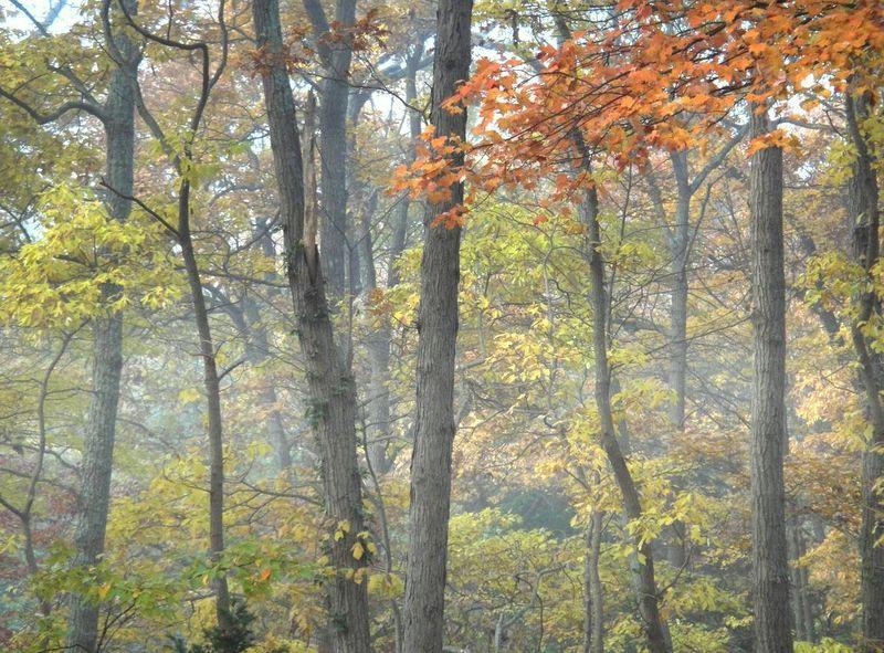A bit of fog in autumn