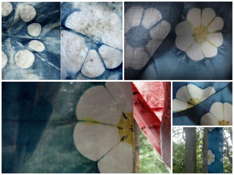 Moonflower evolution