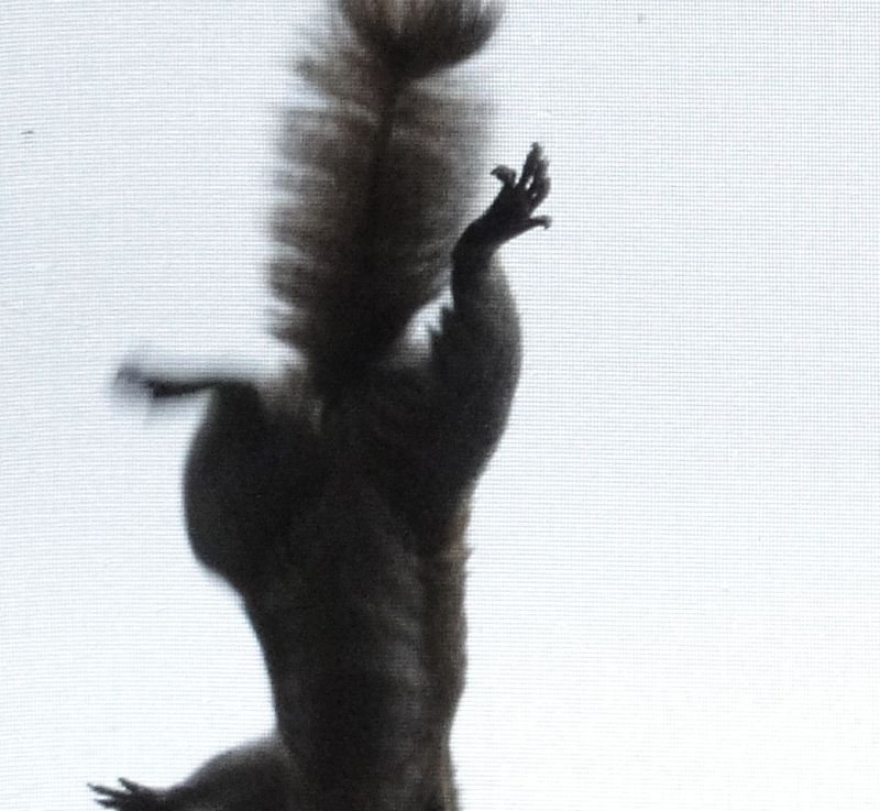 Squirrel on the screen