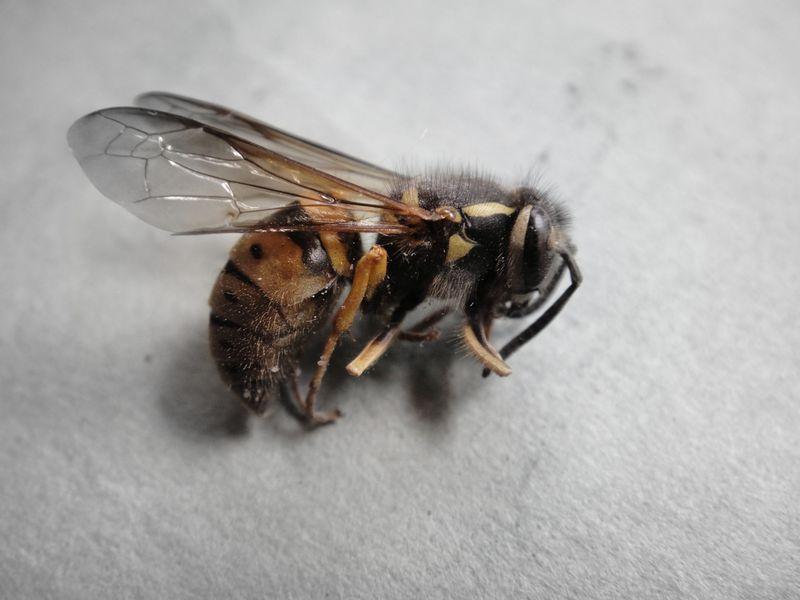 Just dead bee