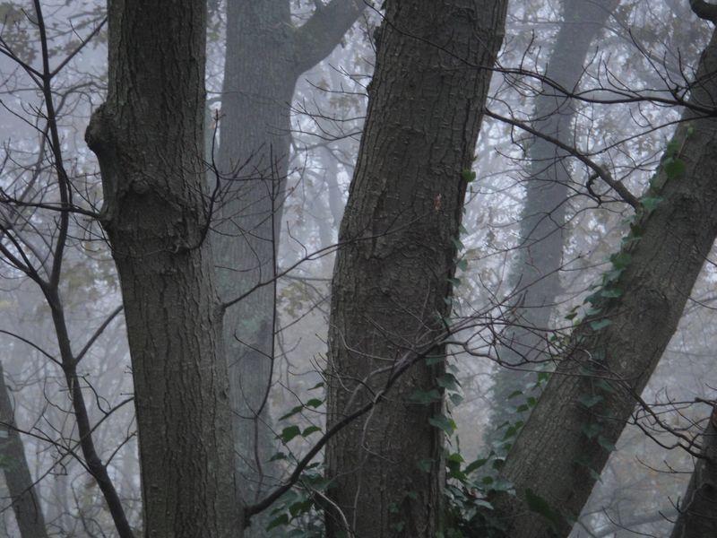 Through the maple