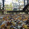 Got leaves