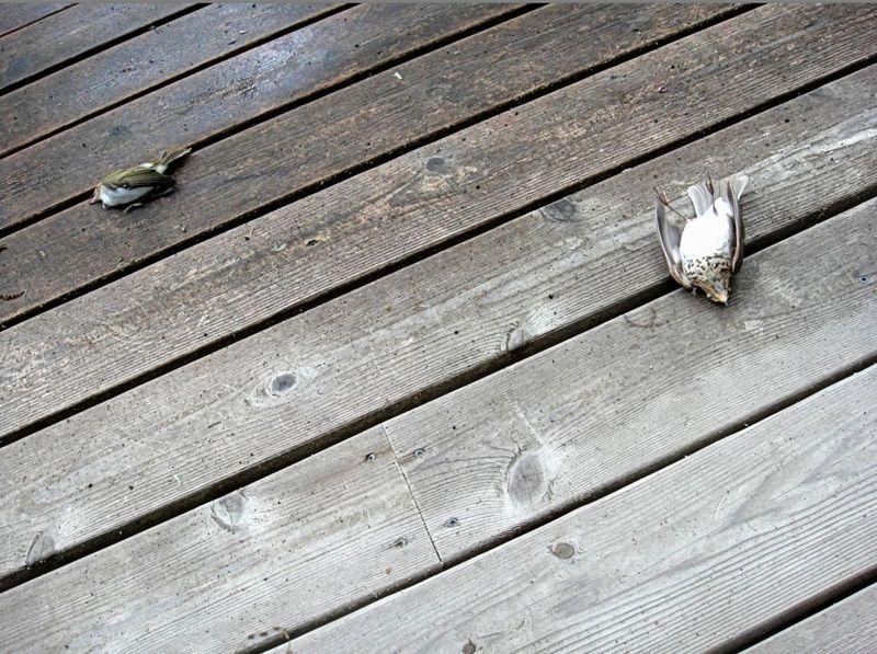 Two still birds