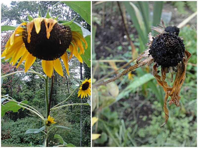 September yellow
