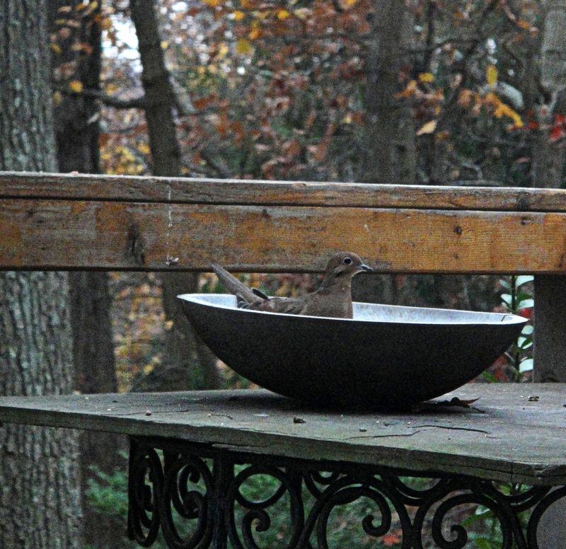 Bowl of bird