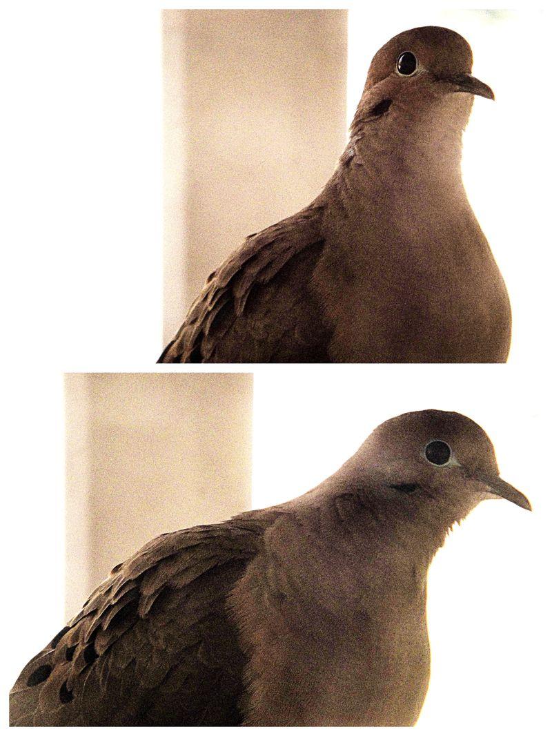 Dove looks
