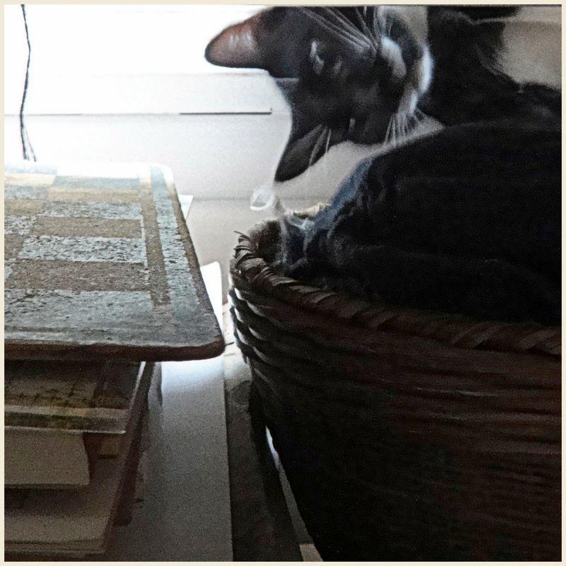 Crazy cat 1