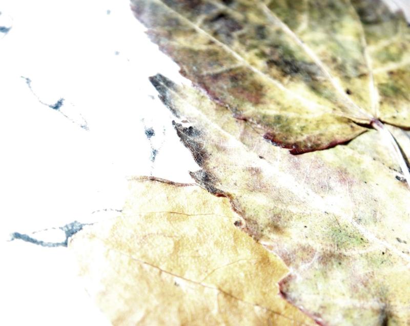leaves like paper