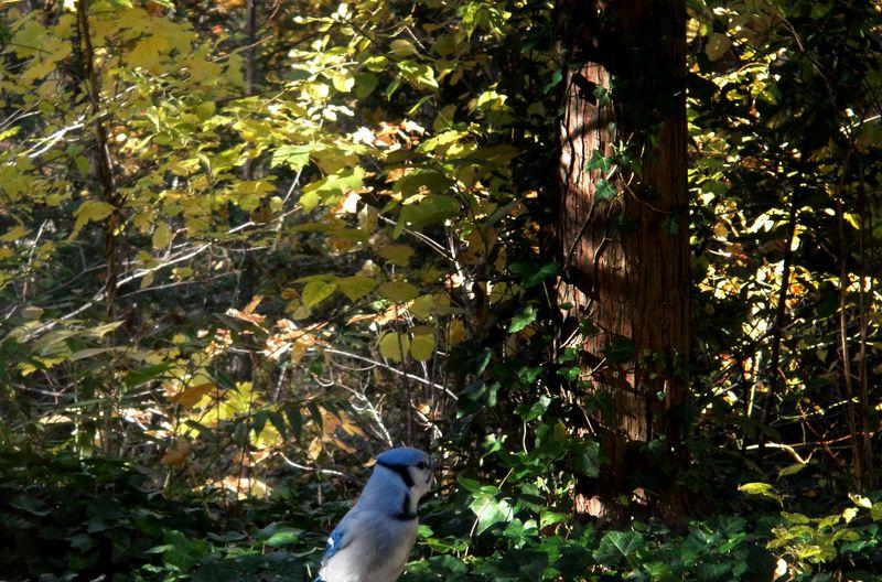 November blue