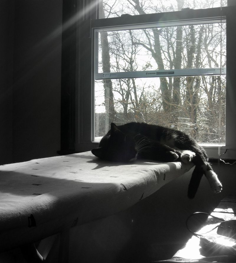 Napping in the winter sun