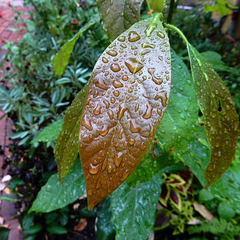 Rain thank you