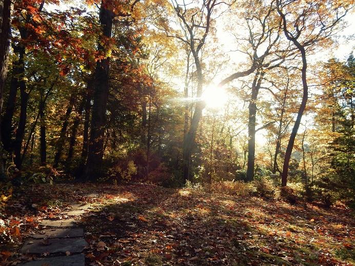 November sun -2