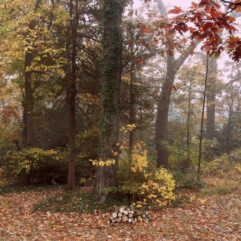 Windfall and mist