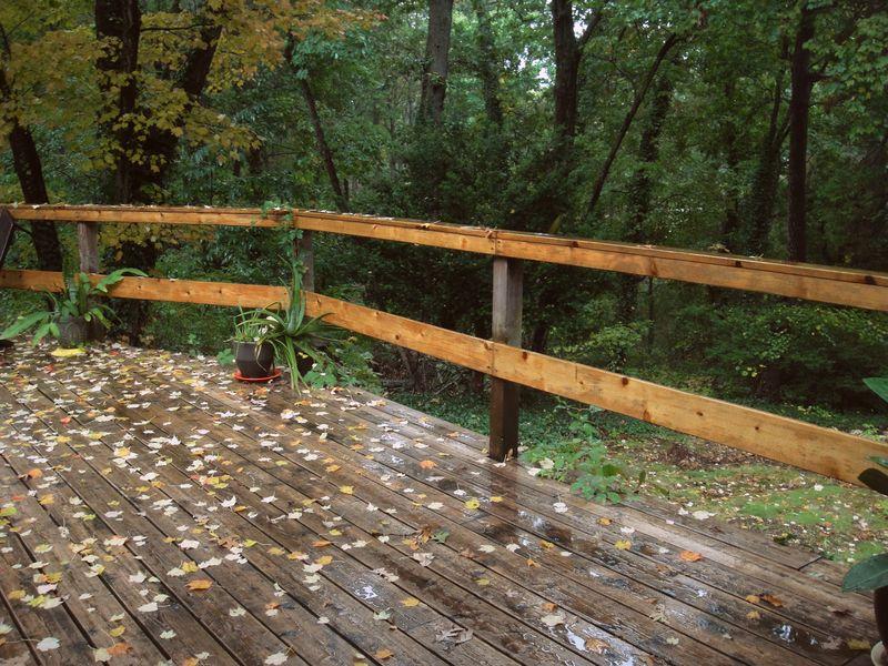 Maple leaves fallling