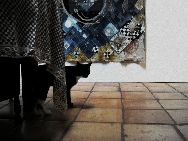 Cat and cloth