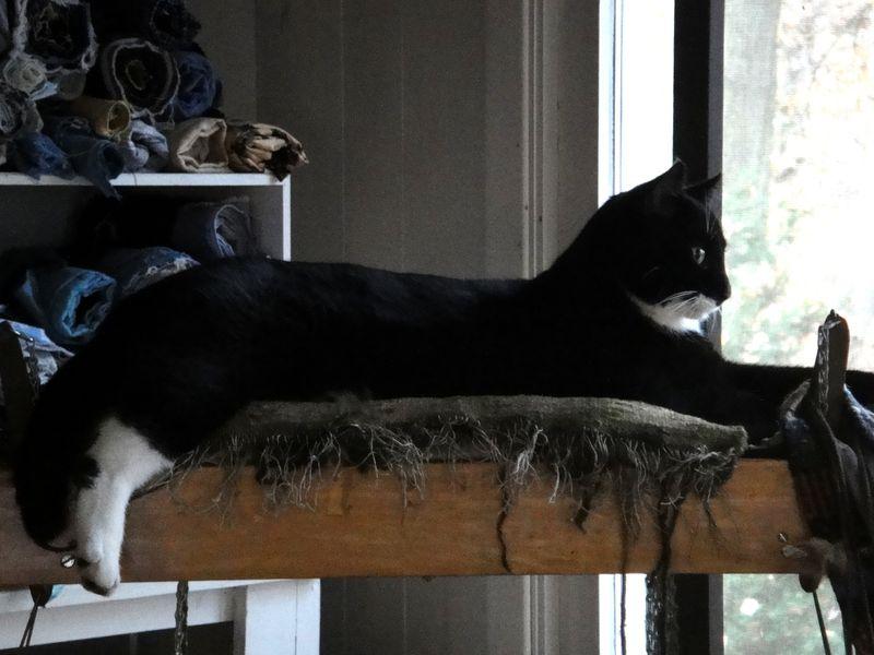 Big cat, little nest