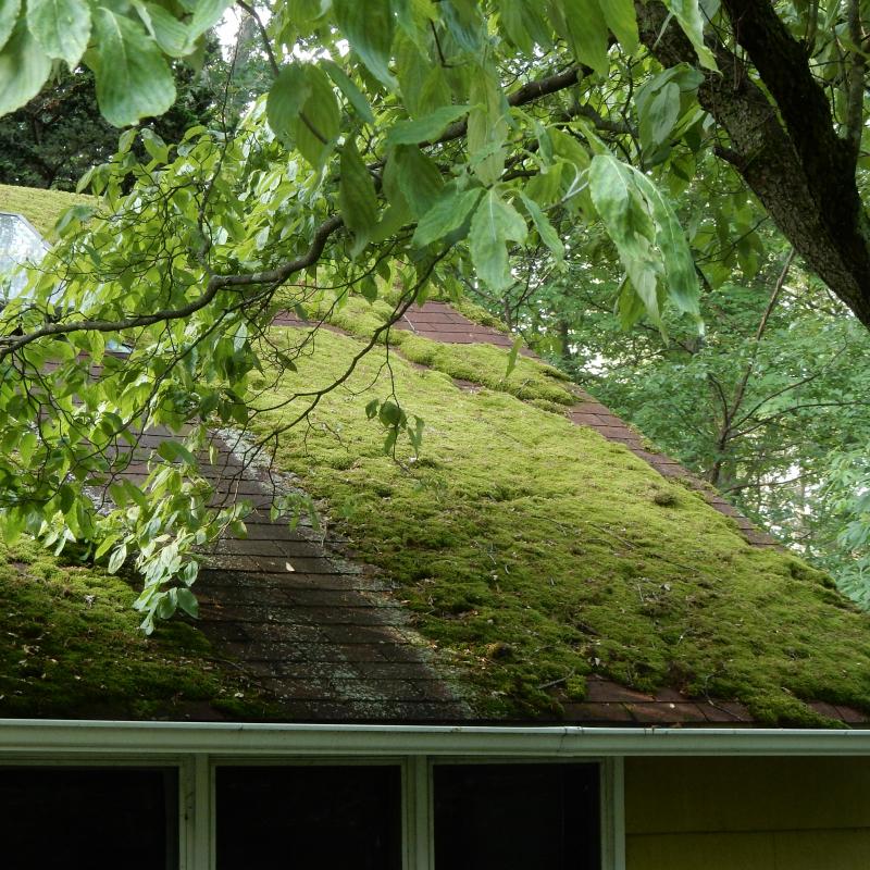 Happy roof