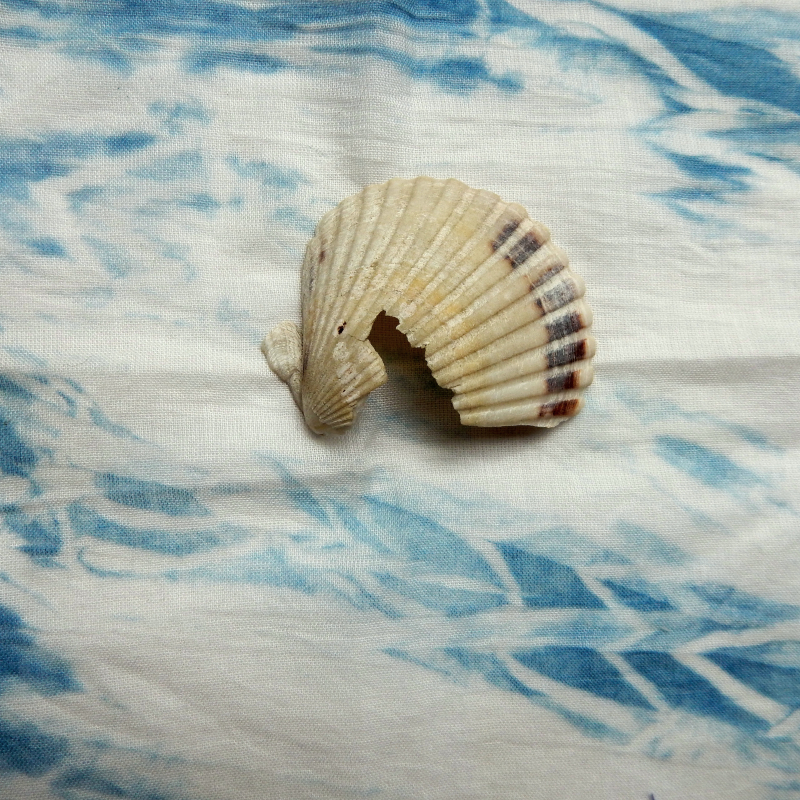 Shell and cloth sea