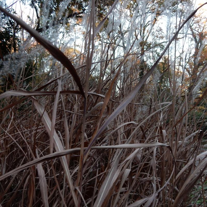 November grass