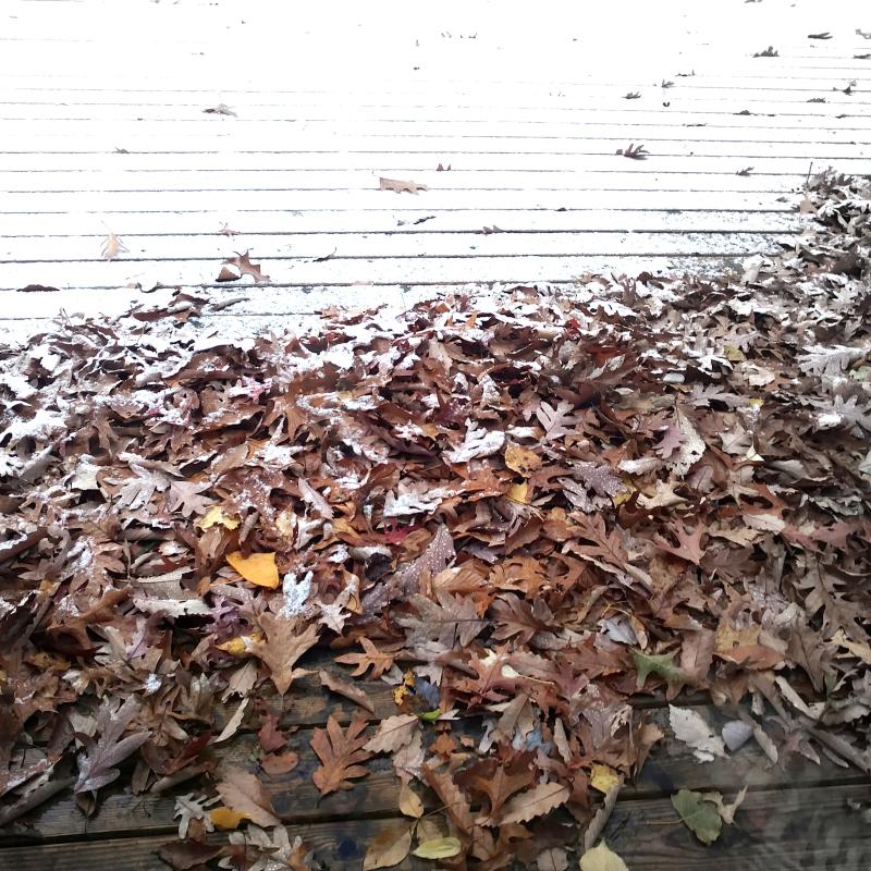 November turning