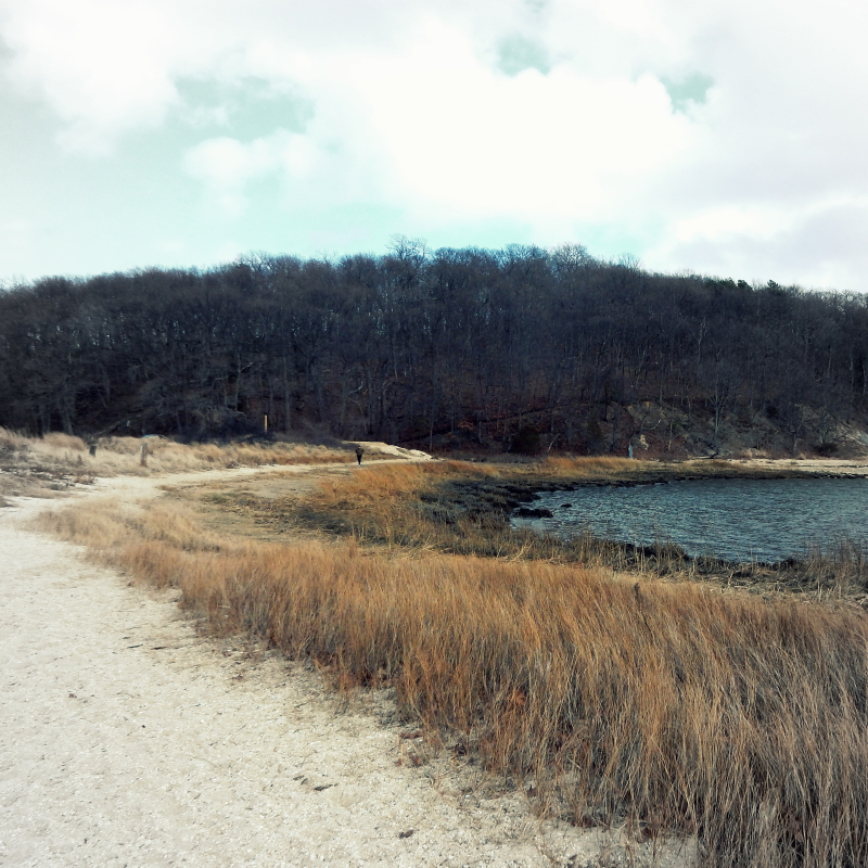 Edge of centerport beach