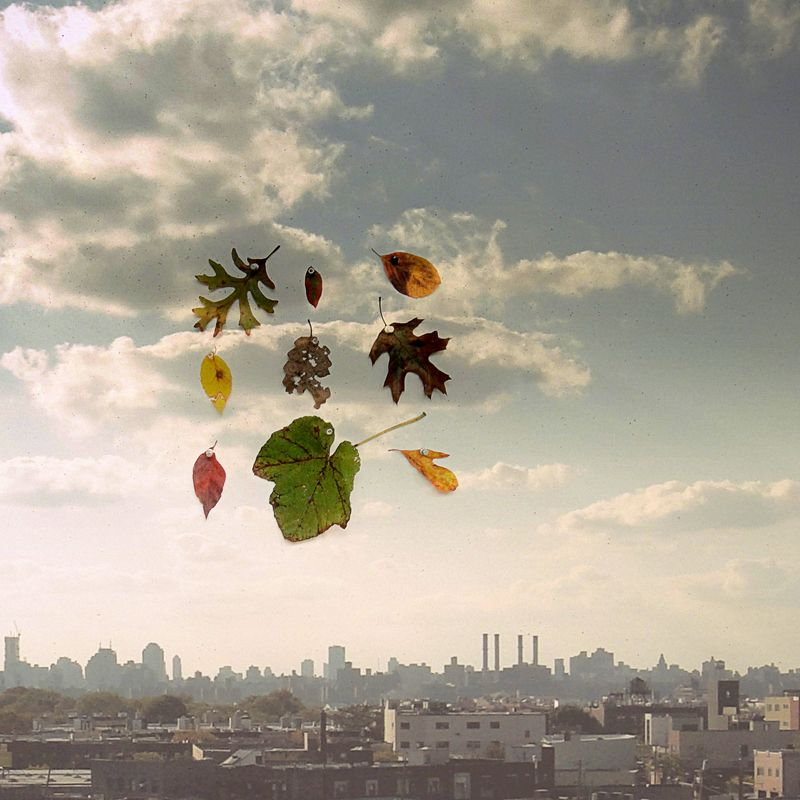 Nine leaves over nyc