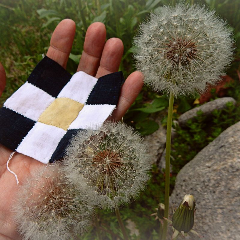 Memory of a dandelion