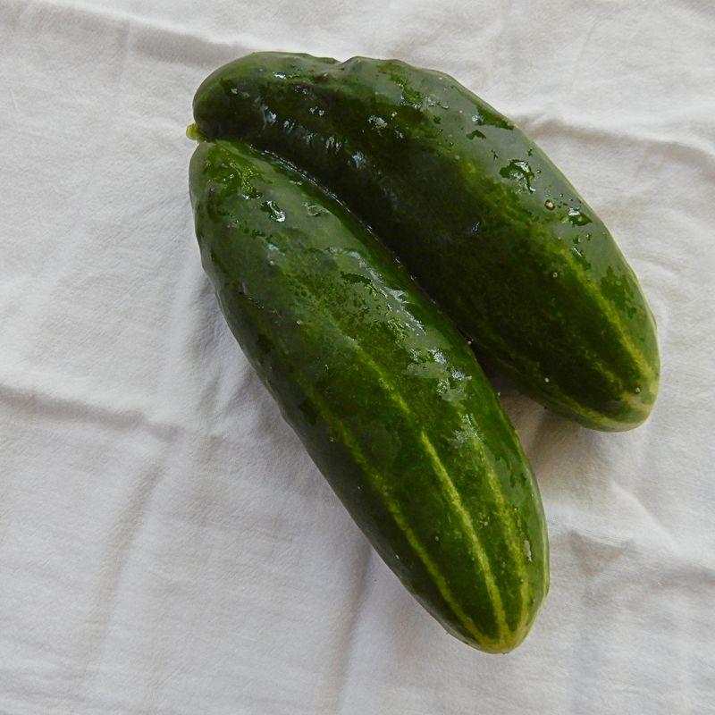 Siamese cucumber twins