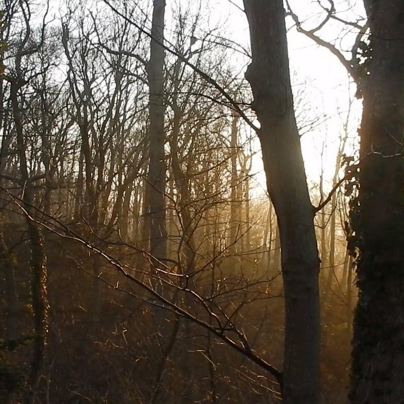 Spring-ish mist