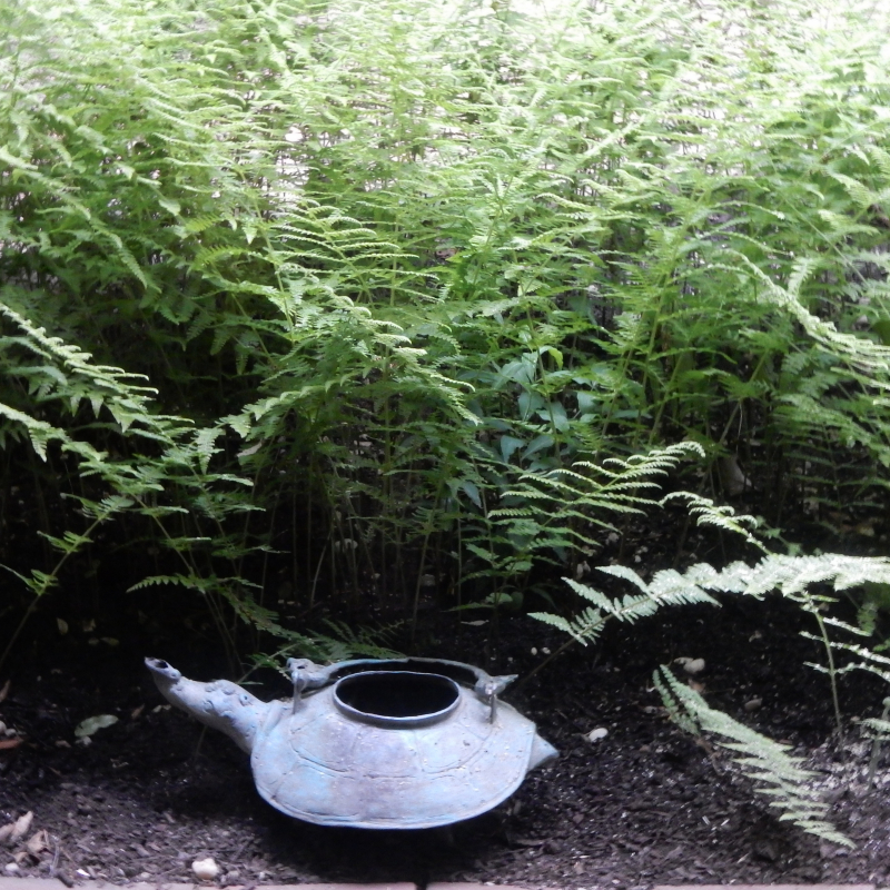 Ferns and kettle