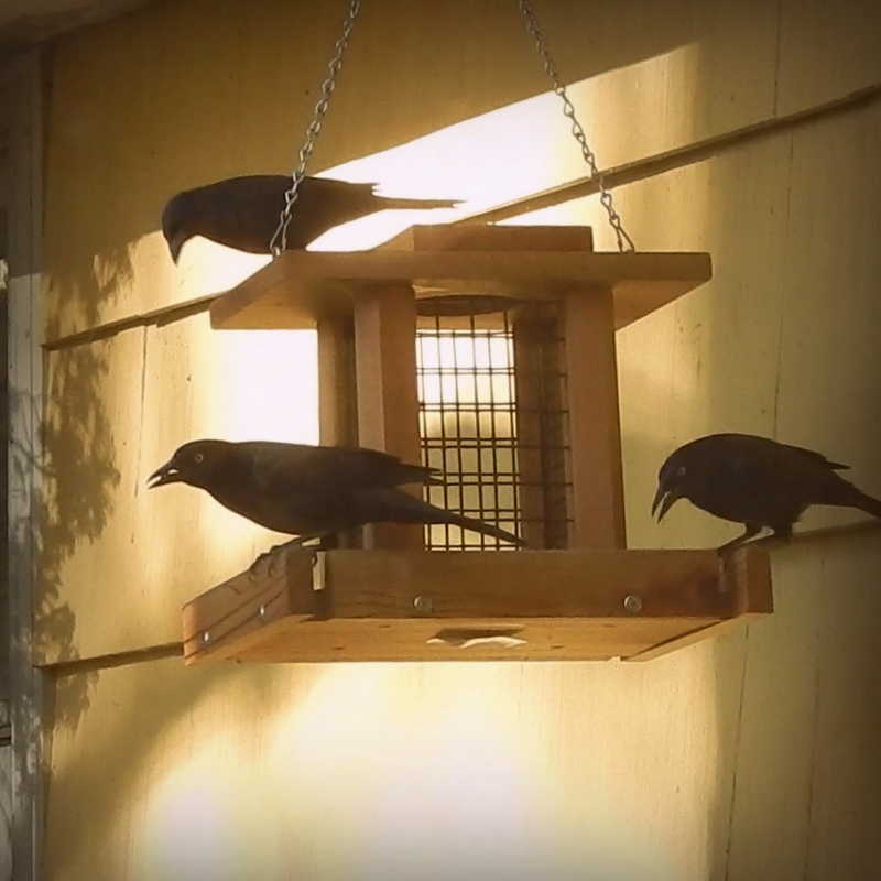 Morning at the feeder