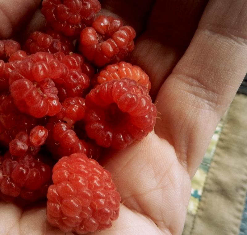 Late berries