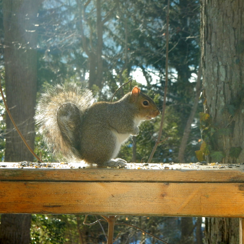 A squirrel on the rail