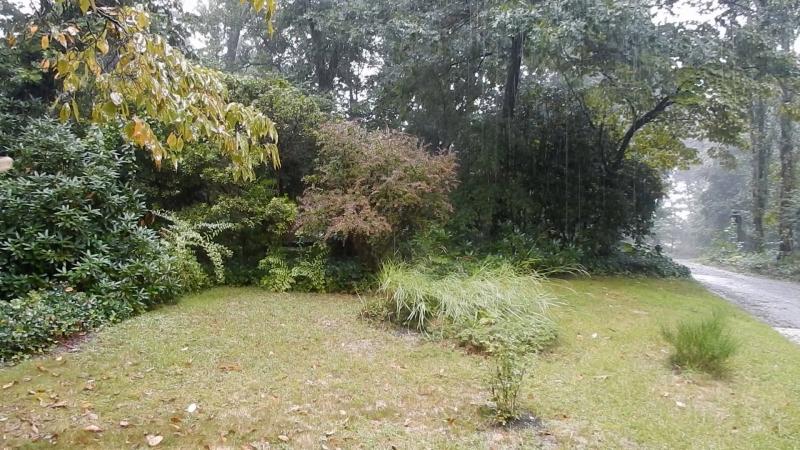 Rain day 5
