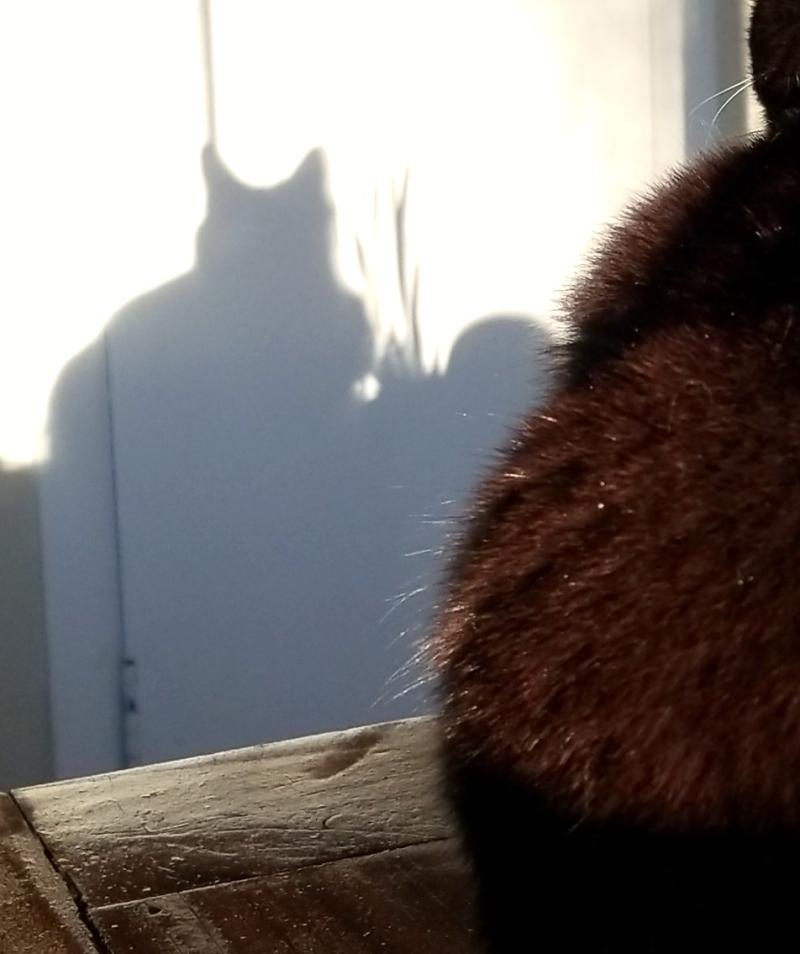 Soul-o shadow
