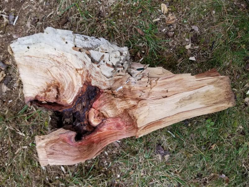 Wooden wound