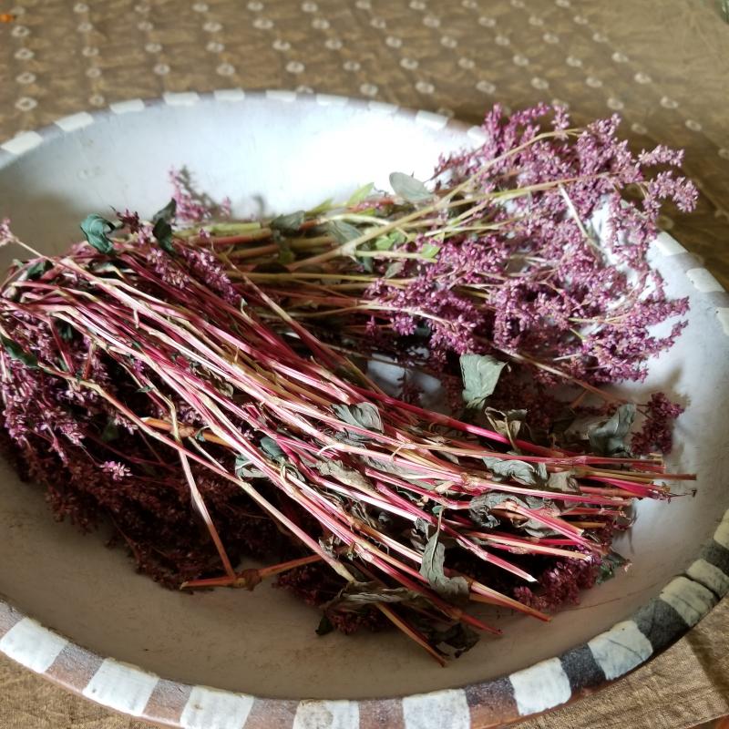 Indigo seed harvest