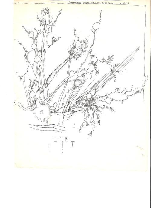 Dried_flowers