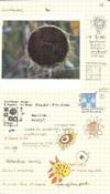 Sunflowers_4