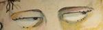 Eyes_3