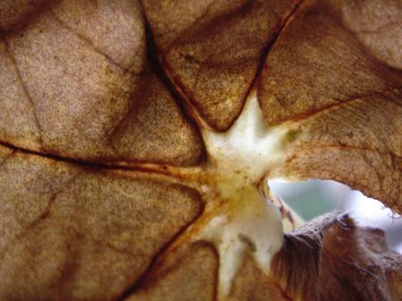 Leaf_sun_ghost