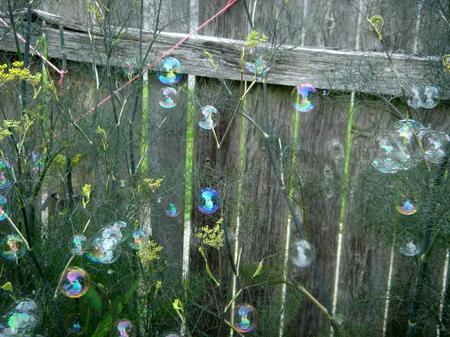 Fennel_and_bubbles